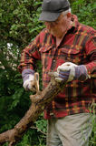 Senior male cutting back tree. Log with axe Stock Image