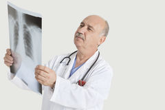 Senior male doctor examining medical radiograph over gray background Royalty Free Stock Photography