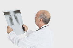 Senior male doctor examining medical radiograph over gray background Royalty Free Stock Images