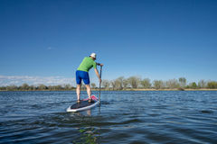 Senior male exercising on SUP paddleboard Royalty Free Stock Images