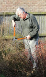 Senior male gardener pruning bush. Royalty Free Stock Photos