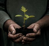 Senior male hands carrying small plant stock images