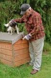Senior male preparing dog Royalty Free Stock Image