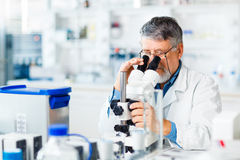 Senior male researcher  in a lab Royalty Free Stock Photos