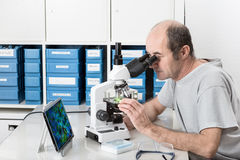 Senior male scientist or tech works in the lab. Senior male scientist or tech observes sample under the microscope Stock Photo