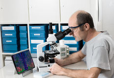 Senior male scientist or tech works with microscope. Senior male scientist or tech observes sample under the microscope Stock Photos