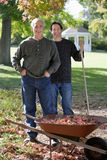 Senior man and adult son collecting autumn leaves in wheelbarrow in garden, smiling, portrait Royalty Free Stock Image