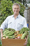Senior Man On Allotment With Box Of Home Grown Vegetables Stock Photo
