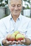 Senior Man On Allotment Holding Freshly Picked Apples Royalty Free Stock Photos