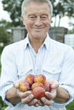 Senior Man On Allotment Holding Freshly Picked Apples Royalty Free Stock Images