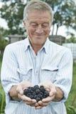 Senior Man On Allotment Holding Freshly Picked Blackberries Royalty Free Stock Images