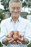 Senior Man On Allotment Holding Freshly Picked Plums Royalty Free Stock Images