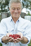 Senior Man On Allotment Holding Freshly Picked Raspberries Royalty Free Stock Images
