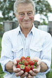 Senior Man On Allotment Holding Freshly Picked Strawberries Stock Photo