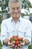 Senior Man On Allotment Holding Freshly Picked Strawberries Stock Photo