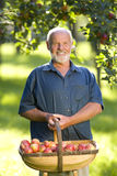 Senior man with basket of apples, smiling, portrait Royalty Free Stock Photos