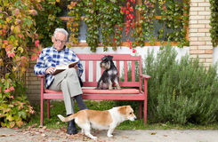 Senior man with book and dogs. Senior man reading book in courtyard while dogs making his company Royalty Free Stock Images