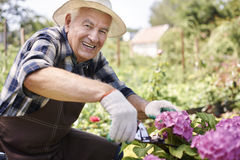 Senior man caring about garden flowers Stock Images