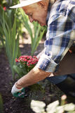 Senior man caring about garden flowers Royalty Free Stock Photography