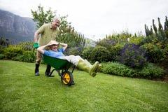 Senior man carrying his partner in wheelbarrow Stock Photos