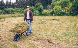 Senior man carrying wheelbarrow with hay on field Royalty Free Stock Photography