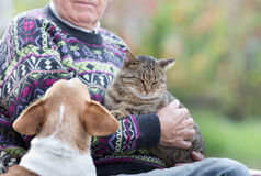 Senior man with cat and dog. Senior man holding a cat in his arms and dog is watching at him Stock Photos