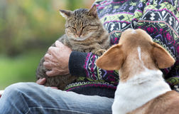 Senior man with cat and dog. Senior man holding a cat in his arms and dog is watching at him Royalty Free Stock Photo