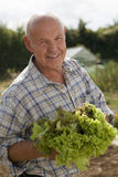 Senior man in checked shirt holding fresh leaf vegetable in garden, smiling, close-up, portrait Royalty Free Stock Photography