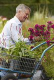 Senior Man Choosing Plants At Garden Centre Stock Photography