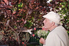 Senior man cleaning trees Stock Photos