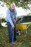 Senior man collecting leaves Stock Photo