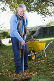 Senior man collecting leaves in garden