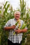 Senior man in corn field Royalty Free Stock Images
