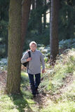 Senior Man On Country Walk Through Woodland Stock Images