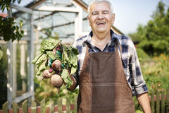 Senior man with crops. Older man is proud of his crops Stock Photos