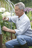 Senior Man Cultivating Flowers In Garden Royalty Free Stock Images