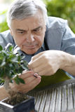 Senior man cutting leaves of plants Stock Photography