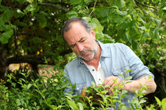 Senior man cutting plants in home garden Stock Photo