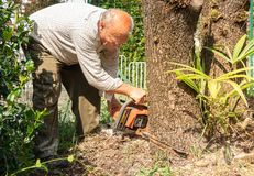 Senior man cutting tree with chainsaw. In the garden stock photo