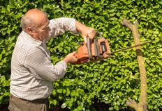 Senior man cutting tree with chainsaw. In the garden royalty free stock image