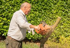 Senior man cutting tree with chainsaw. In the garden royalty free stock photo