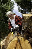 Senior man cutting tree stump with chainsaw Royalty Free Stock Photography
