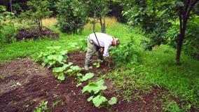 Senior man is digging land. Royalty Free Stock Image
