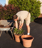 Senior man digging soil in wheelbarrow Stock Images