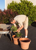 Senior man digging soil in wheelbarrow Royalty Free Stock Photo