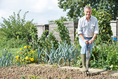 Senior Man Digging Vegetable Patch On Allotment Stock Photo