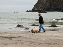 Senior man and dog on beach. Senior man and small dog with stick in his mouth walking on a rock strewn ocean beach Stock Photos