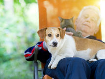 Senior man with dog and cat. Senior man lying in sunbed in courtyard while dog and cat sitting in his lap stock photo