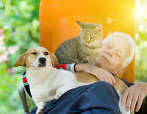 Senior man with dog and cat. Senior man sleeping in sunbed in courtyard while dog and cat sitting in his lap stock image