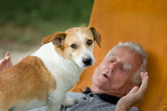 Senior man with dog. Cute dog standing on old man's chest and looking at camera royalty free stock images
